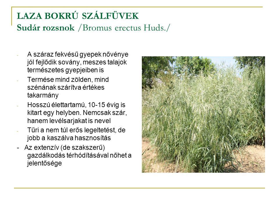 LAZA BOKRÚ SZÁLFÜVEK Sudár rozsnok /Bromus erectus Huds./ - A száraz fekvésű gyepek nővénye jól fejlődik sovány, meszes talajok természetes gyepjeiben is - Termése mind zölden, mind szénának szárítva értékes takarmány - Hosszú élettartamú, 10-15 évig is kitart egy helyben.