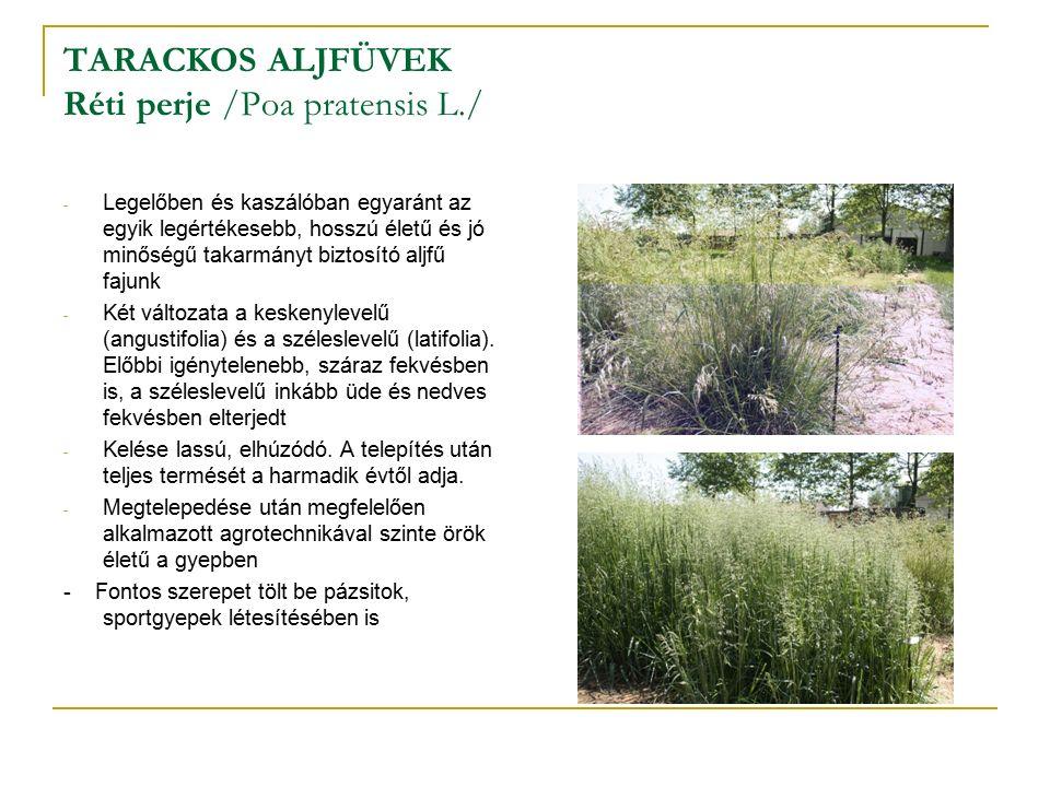 TARACKOS ALJFÜVEK Réti perje /Poa pratensis L./ - Legelőben és kaszálóban egyaránt az egyik legértékesebb, hosszú életű és jó minőségű takarmányt biztosító aljfű fajunk - Két változata a keskenylevelű (angustifolia) és a széleslevelű (latifolia).