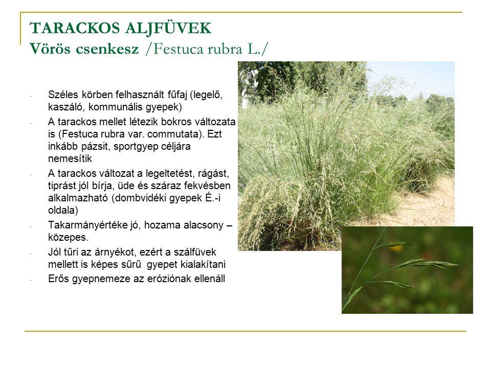 TARACKOS ALJFÜVEK Vörös csenkesz /Festuca rubra L./ - Széles körben felhasznált fűfaj (legelő, kaszáló, kommunális gyepek) - A tarackos mellet létezik bokros változata is (Festuca rubra var.