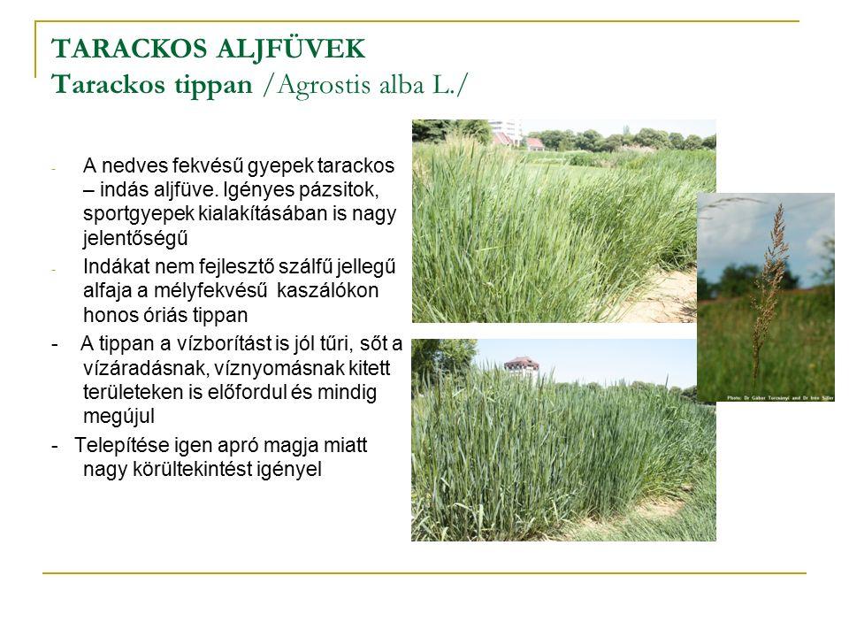 TARACKOS ALJFÜVEK Tarackos tippan /Agrostis alba L./ - A nedves fekvésű gyepek tarackos – indás aljfüve.
