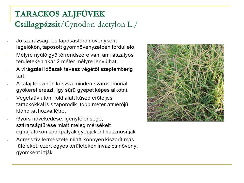 TARACKOS ALJFÜVEK Csillagpázsit/Cynodon dactylon L./ - Jó szárazság- és taposástűrő növényként legelőkön, taposott gyomnövényzetben fordul elő.