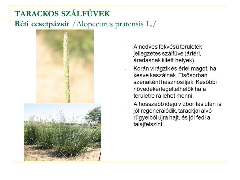 TARACKOS SZÁLFÜVEK Réti ecsetpázsit /Alopecurus pratensis L./ - A nedves fekvésű területek jellegzetes szálfüve (ártéri, áradásnak kitett helyek).