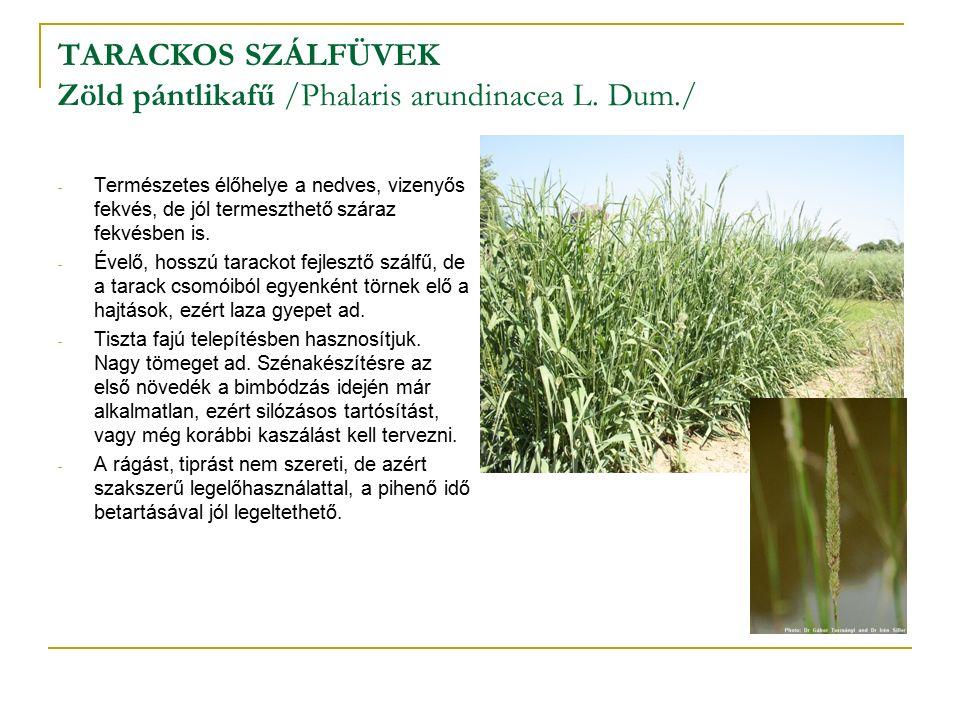 TARACKOS SZÁLFÜVEK Zöld pántlikafű /Phalaris arundinacea L.