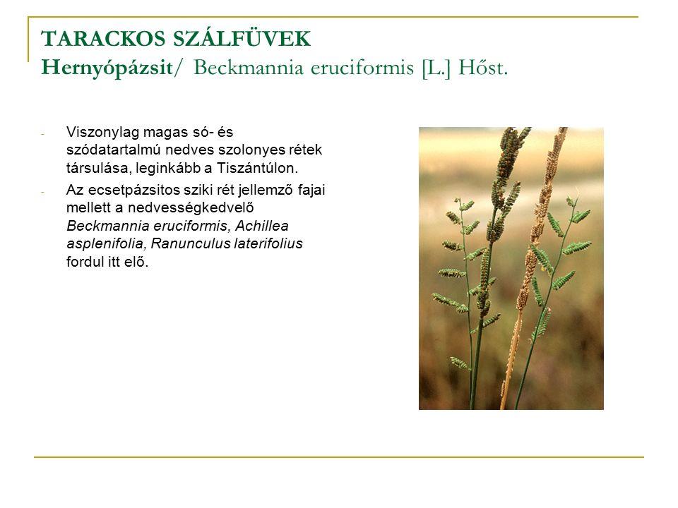 TARACKOS SZÁLFÜVEK Hernyópázsit/ Beckmannia eruciformis [L.] Hőst.