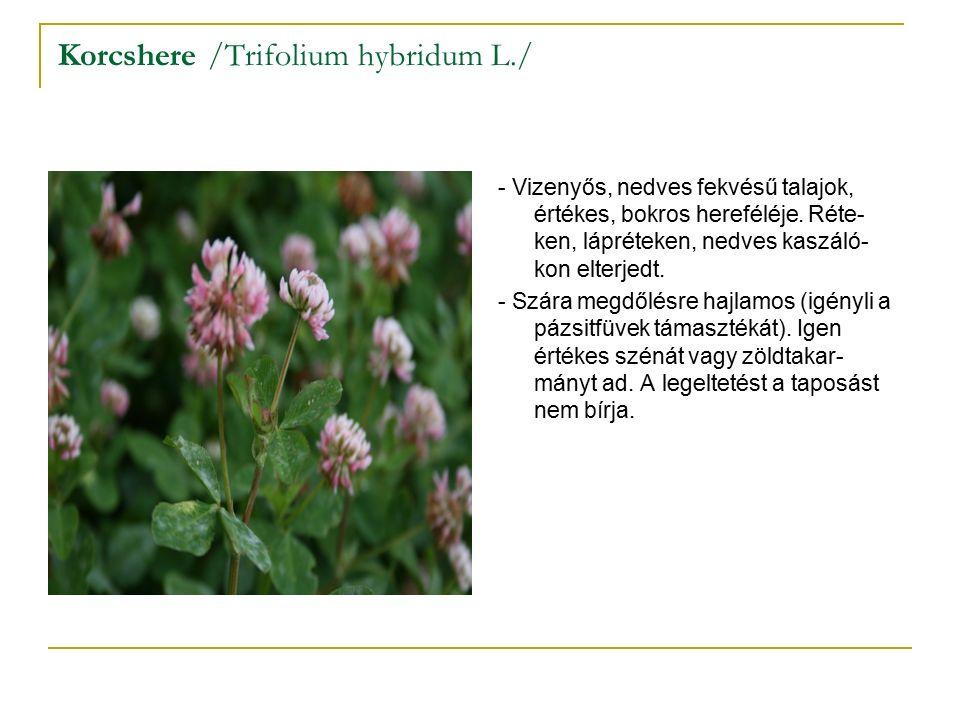 Korcshere /Trifolium hybridum L./ - Vizenyős, nedves fekvésű talajok, értékes, bokros hereféléje.