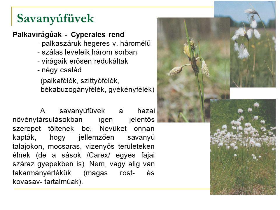 Savanyúfüvek Palkavirágúak - Cyperales rend - palkaszáruk hegeres v.