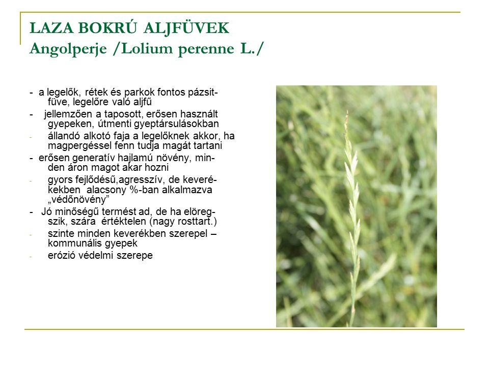 """LAZA BOKRÚ ALJFÜVEK Angolperje /Lolium perenne L./ - a legelők, rétek és parkok fontos pázsit- füve, legelőre való aljfű - jellemzően a taposott, erősen használt gyepeken, útmenti gyeptársulásokban - állandó alkotó faja a legelőknek akkor, ha magpergéssel fenn tudja magát tartani - erősen generatív hajlamú növény, min- den áron magot akar hozni - gyors fejlődésű,agresszív, de keveré- kekben alacsony %-ban alkalmazva """"védőnövény - Jó minőségű termést ad, de ha elöreg- szik, szára értéktelen (nagy rosttart.) - szinte minden keverékben szerepel – kommunális gyepek - erózió védelmi szerepe"""