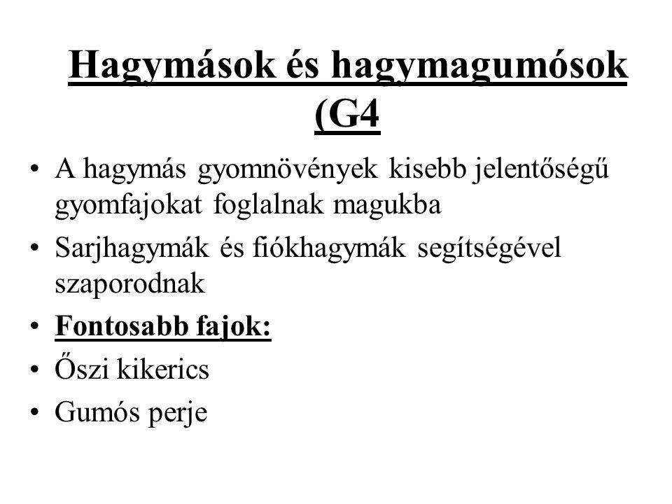 Hagymások és hagymagumósok (G4 A hagymás gyomnövények kisebb jelentőségű gyomfajokat foglalnak magukba Sarjhagymák és fiókhagymák segítségével szaporodnak Fontosabb fajok: Őszi kikerics Gumós perje