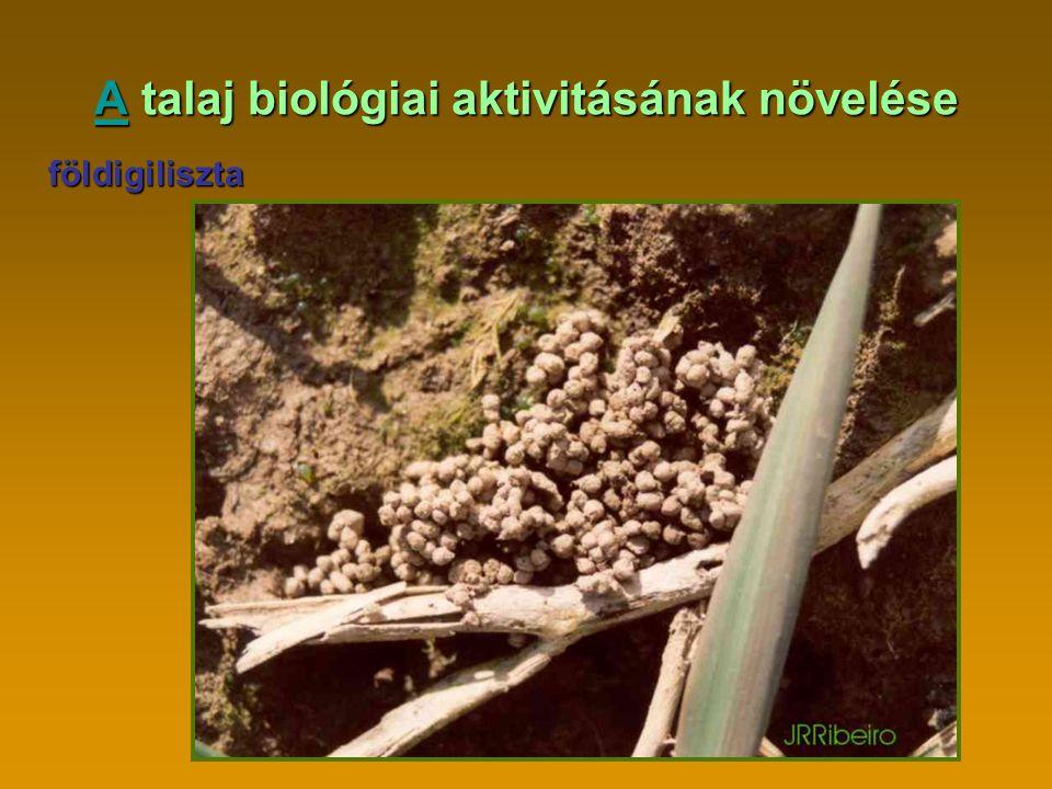 AA talaj biológiai aktivitásának növelése A földigiliszta