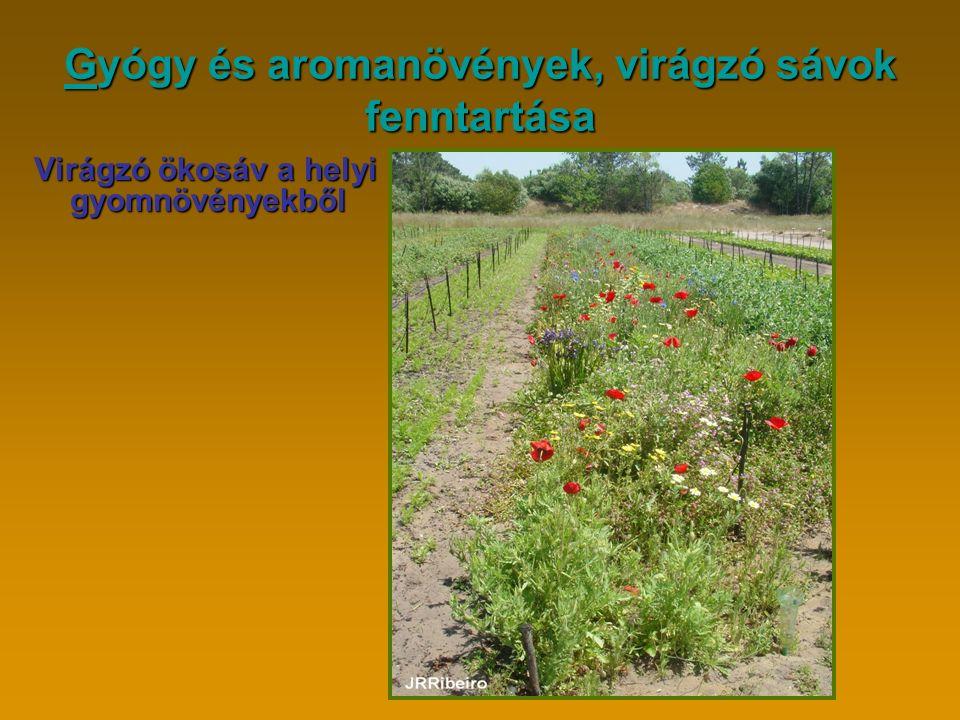 GGyógy és aromanövények, virágzó sávok fenntartása G Virágzó ökosáv a helyi gyomnövényekből