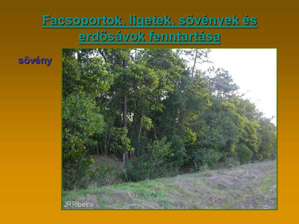 Facsoportok, ligetek, sövények és erdősávok fenntartása Facsoportok, ligetek, sövények és erdősávok fenntartásasövény