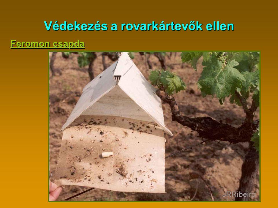 Védekezés a rovarkártevők ellen Feromon csapda