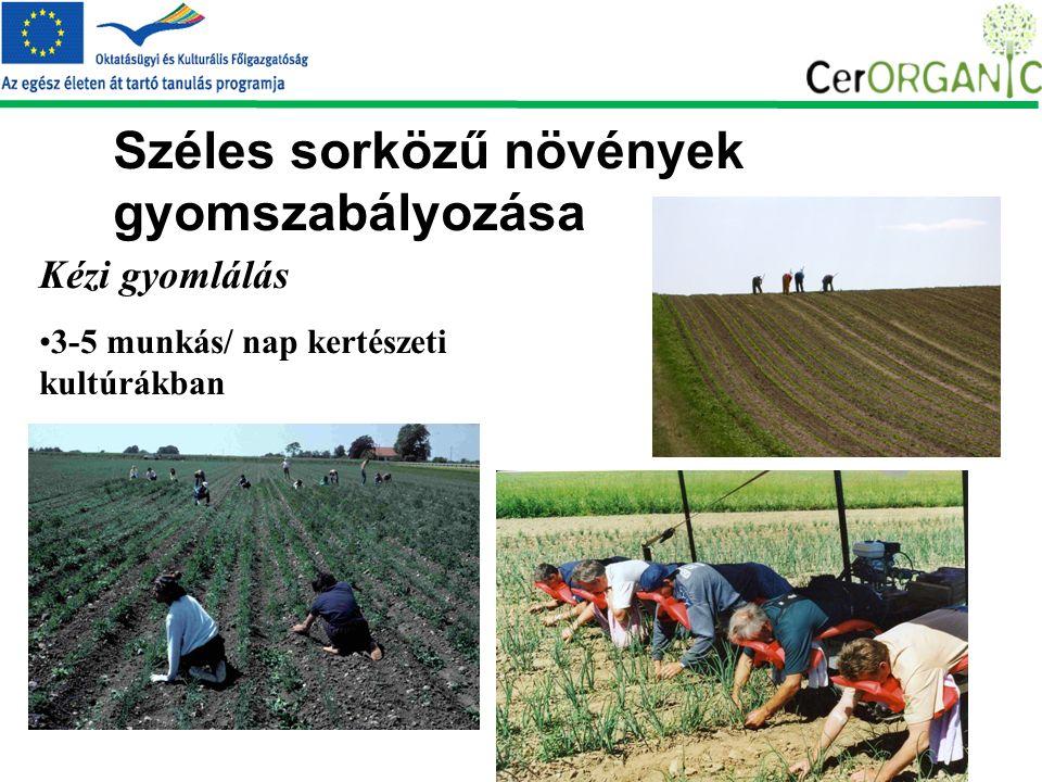 Széles sorközű növények gyomszabályozása Kézi gyomlálás 3-5 munkás/ nap kertészeti kultúrákban