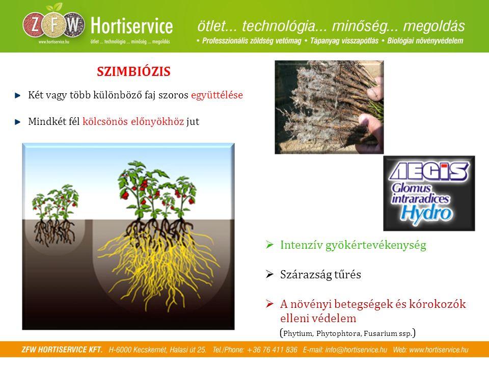 SZIMBIÓZIS Két vagy több különböző faj szoros együttélése Mindkét fél kölcsönös előnyökhöz jut  Intenzív gyökértevékenység  Szárazság tűrés  A növényi betegségek és kórokozók elleni védelem ( Phytium, Phytophtora, Fusarium ssp.