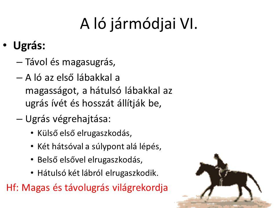 A ló jármódjai VI. Ugrás: – Távol és magasugrás, – A ló az első lábakkal a magasságot, a hátulsó lábakkal az ugrás ívét és hosszát állítják be, – Ugrá
