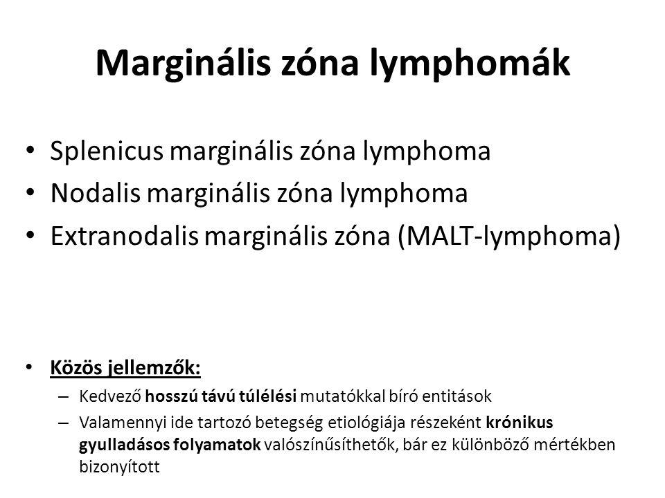 Marginális zóna lymphomák Splenicus marginális zóna lymphoma Nodalis marginális zóna lymphoma Extranodalis marginális zóna (MALT-lymphoma) Közös jelle