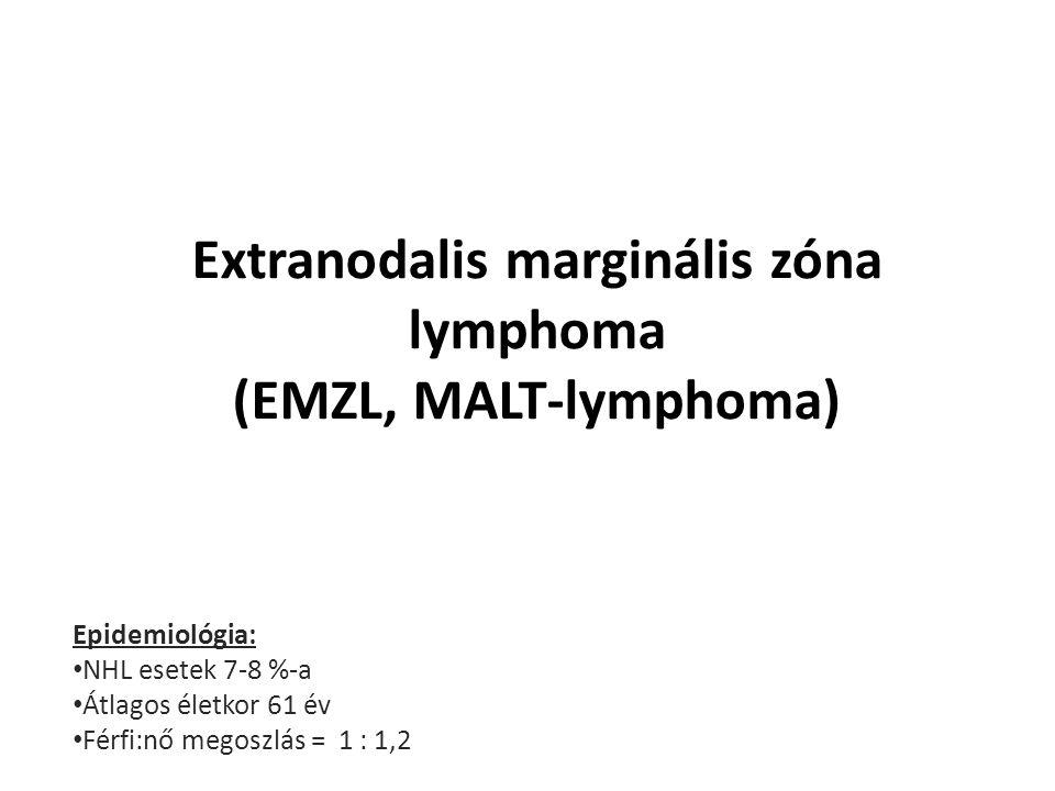 Extranodalis marginális zóna lymphoma (EMZL, MALT-lymphoma) Epidemiológia: NHL esetek 7-8 %-a Átlagos életkor 61 év Férfi:nő megoszlás = 1 : 1,2