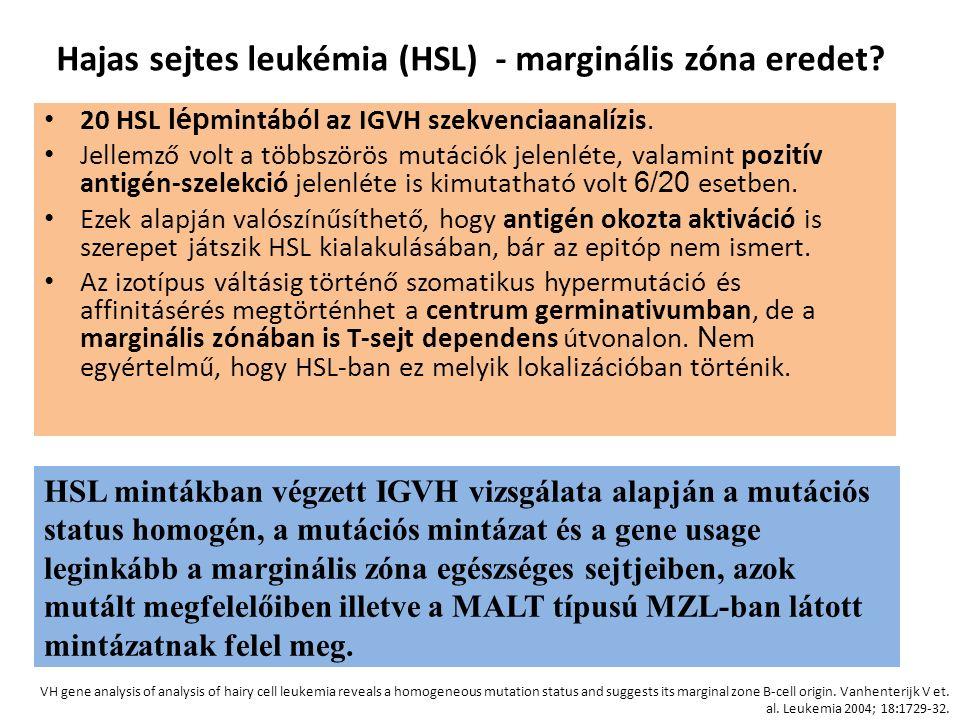 20 HSL lép mintából az IGVH szekvenciaanalízis. Jellemző volt a többszörös mutációk jelenléte, valamint pozitív antigén-szelekció jelenléte is kimutat