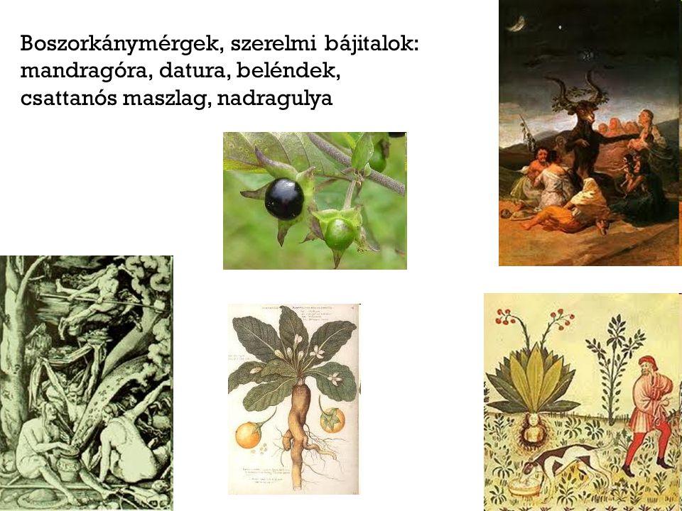 Boszorkánymérgek, szerelmi bájitalok: mandragóra, datura, beléndek, csattanós maszlag, nadragulya