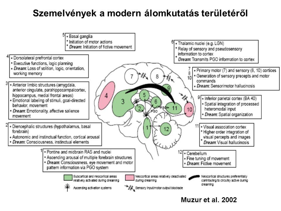 Muzur et al. 2002 Szemelvények a modern álomkutatás területéről
