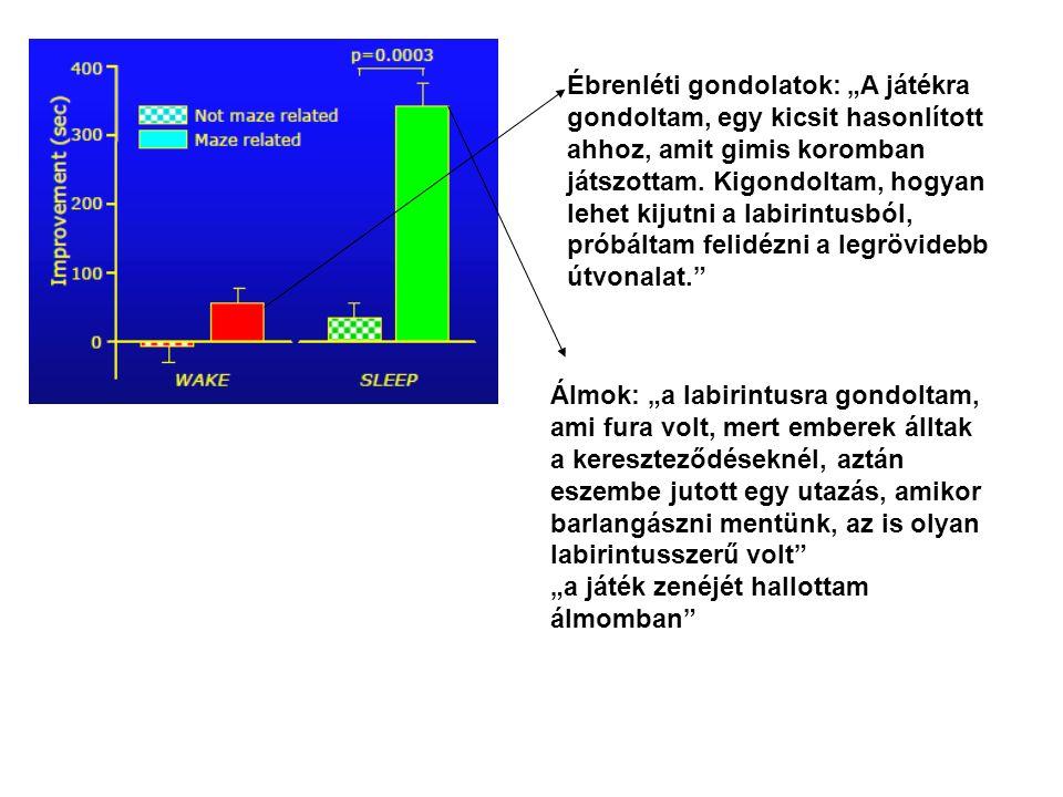 Ribeiro et al, 2004 A tanulást, az idegsejtek közti kapcsolatok serkentését szabályozó gén aktiválódik REM fázis alatt