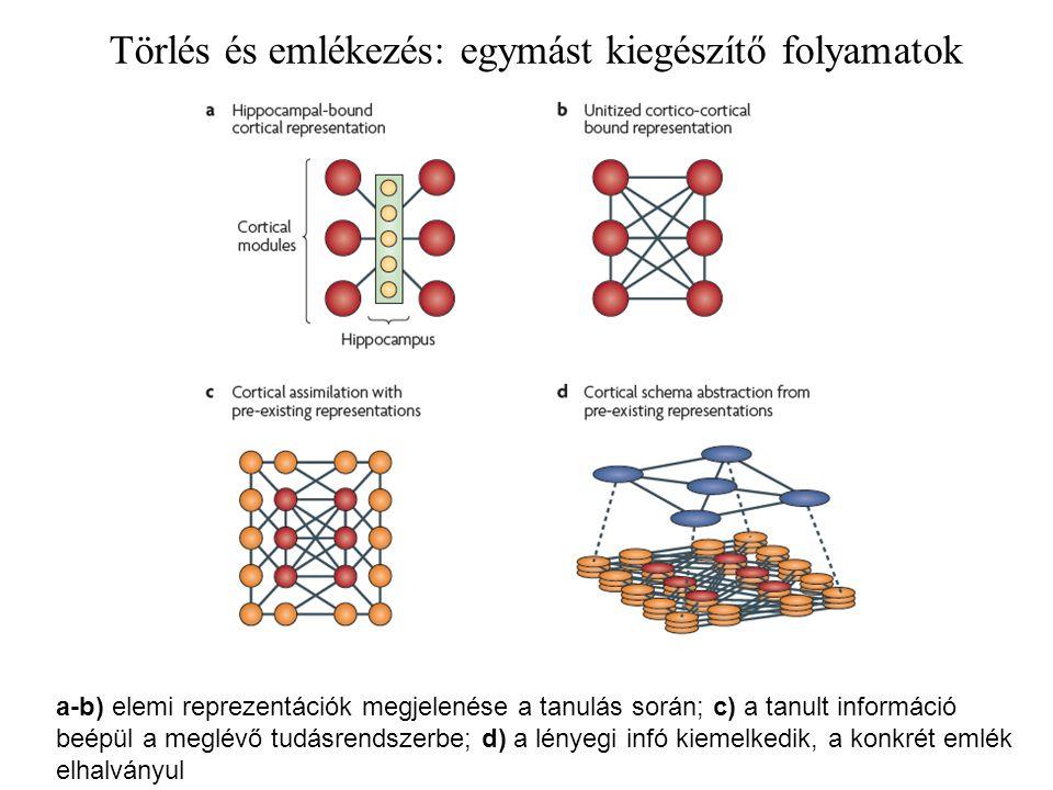 Törlés és emlékezés: egymást kiegészítő folyamatok a-b) elemi reprezentációk megjelenése a tanulás során; c) a tanult információ beépül a meglévő tudásrendszerbe; d) a lényegi infó kiemelkedik, a konkrét emlék elhalványul