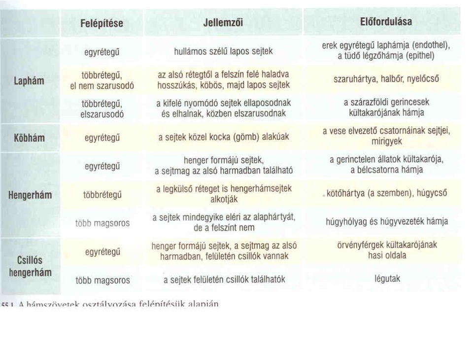 A szarkomer keresztmetszete Eckert: Animal Physiology, W.H.Freeman and Co., N.Y.,2000, Fig. 10-3.