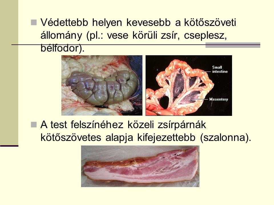 Védettebb helyen kevesebb a kötőszöveti állomány (pl.: vese körüli zsír, cseplesz, bélfodor). A test felszínéhez közeli zsírpárnák kötőszövetes alapja