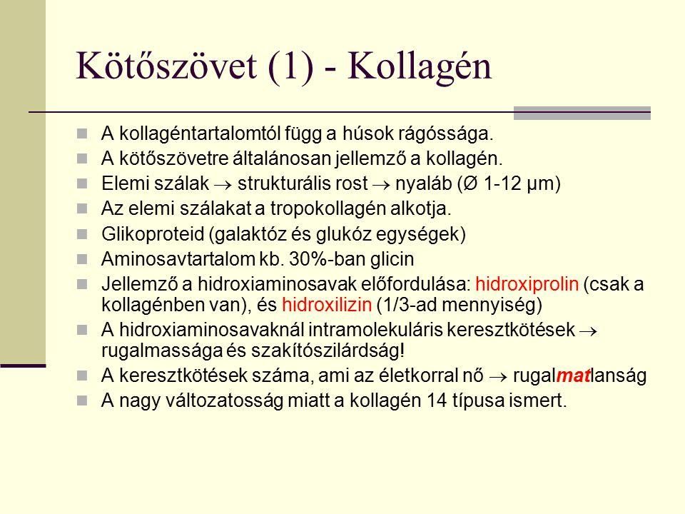 Kötőszövet (1) - Kollagén A kollagéntartalomtól függ a húsok rágóssága. A kötőszövetre általánosan jellemző a kollagén. Elemi szálak  strukturális ro