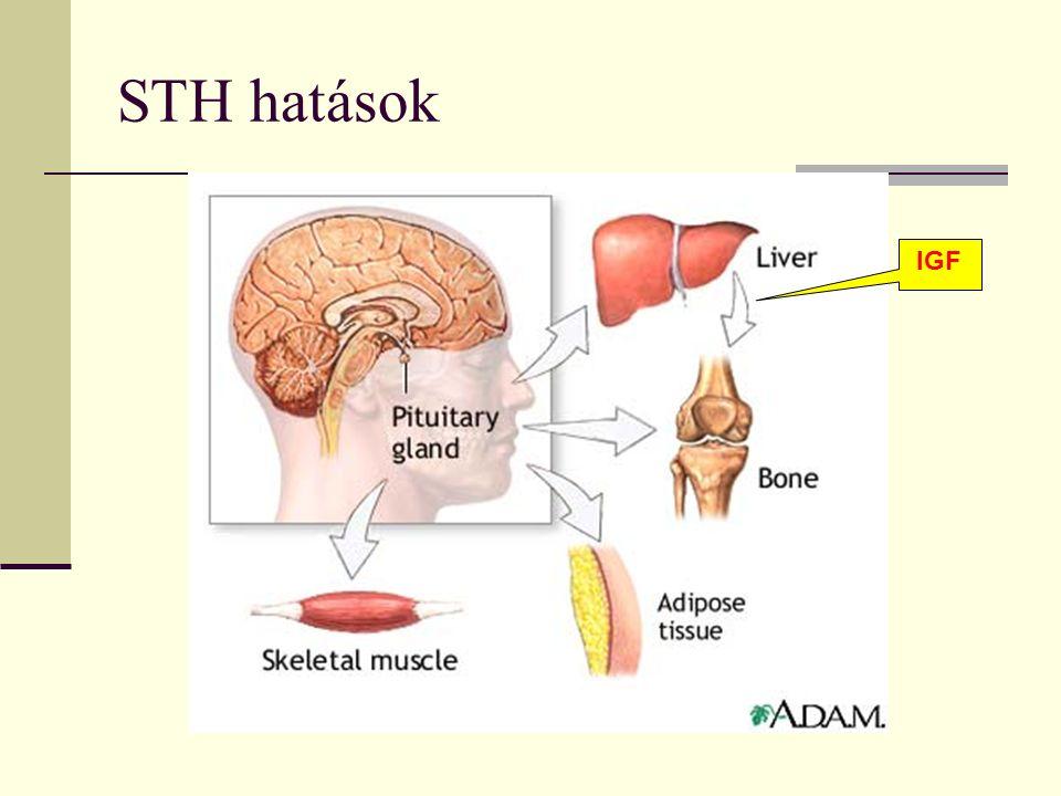 STH hatások IGF