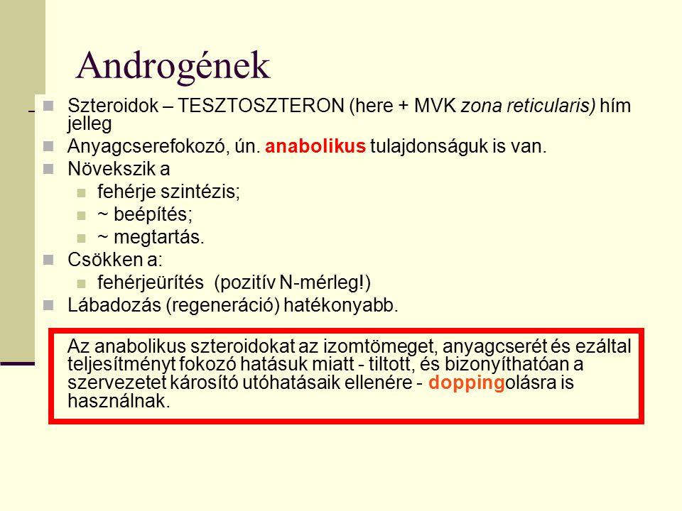 Androgének Szteroidok – TESZTOSZTERON (here + MVK zona reticularis) hím jelleg Anyagcserefokozó, ún. anabolikus tulajdonságuk is van. Növekszik a fehé