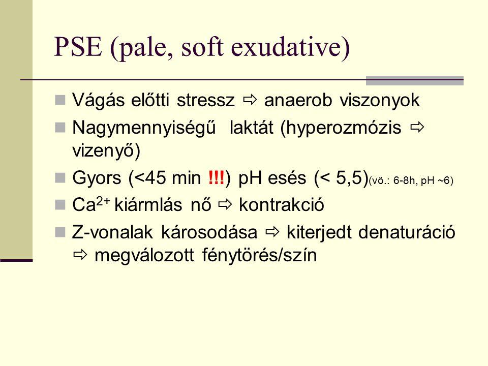 PSE (pale, soft exudative) Vágás előtti stressz  anaerob viszonyok Nagymennyiségű laktát (hyperozmózis  vizenyő) Gyors (<45 min !!!) pH esés (< 5,5)