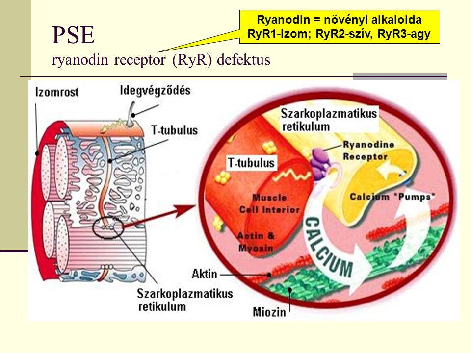 PSE ryanodin receptor (RyR) defektus Ryanodin = növényi alkaloida RyR1-izom; RyR2-szív, RyR3-agy