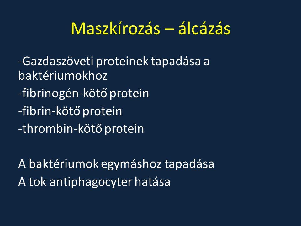 Maszkírozás – álcázás -Gazdaszöveti proteinek tapadása a baktériumokhoz -fibrinogén-kötő protein -fibrin-kötő protein -thrombin-kötő protein A baktériumok egymáshoz tapadása A tok antiphagocyter hatása