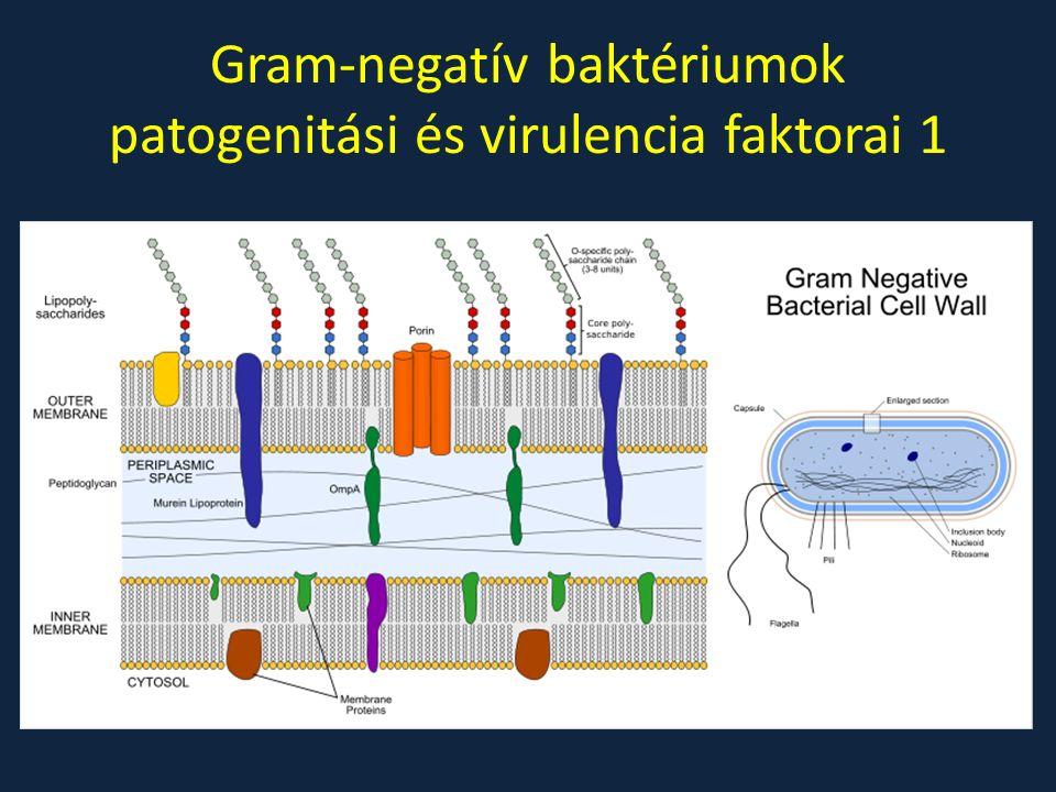Gram-negatív baktériumok patogenitási és virulencia faktorai 1