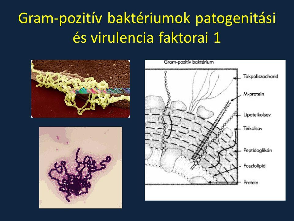 Gram-pozitív baktériumok patogenitási és virulencia faktorai 1