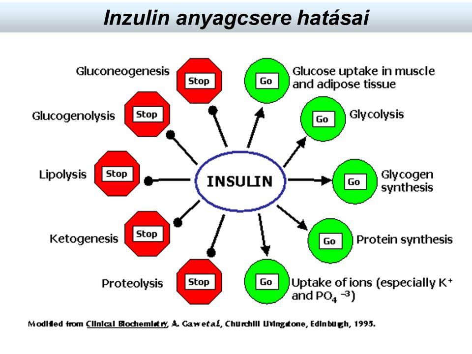 Inzulin anyagcsere hatásai