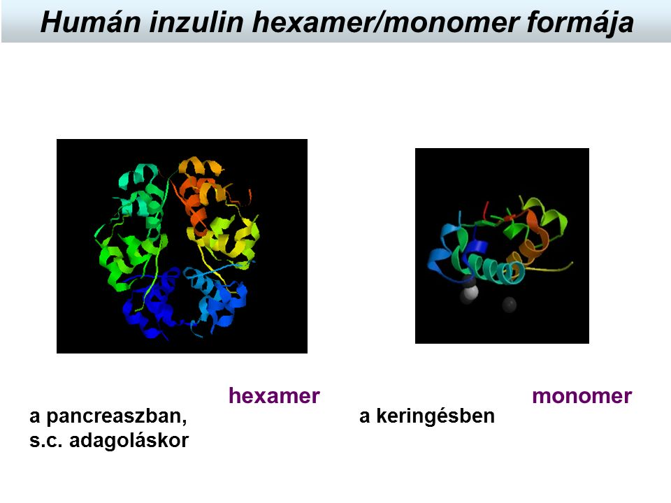monomer hexamer a pancreaszban, s.c.