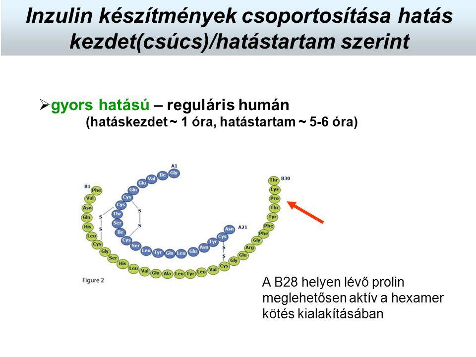  gyors hatású – reguláris humán (hatáskezdet ~ 1 óra, hatástartam ~ 5-6 óra) Inzulin készítmények csoportosítása hatás kezdet(csúcs)/hatástartam szer