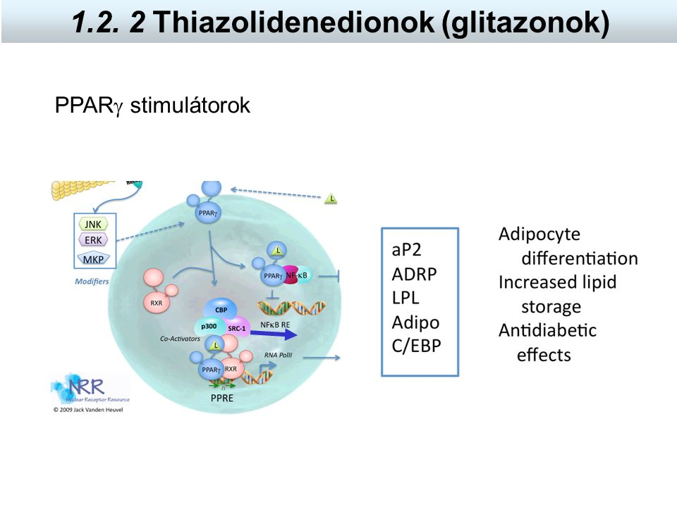 PPAR  stimulátorok 1.2. 2 Thiazolidenedionok (glitazonok)
