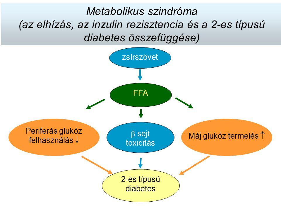 2-es típusú diabetes Periferás glukóz felhasználás  Máj glukóz termelés   sejt toxicitás FFA zsírszövet Metabolikus szindróma (az elhízás, az inzul