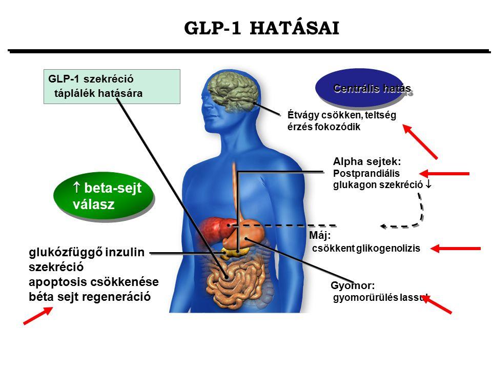 Gyomor: gyomorürülés lassul Étvágy csökken, teltség érzés fokozódik Máj: csökkent glikogenolizis glukózfüggő inzulin szekréció apoptosis csökkenése bé