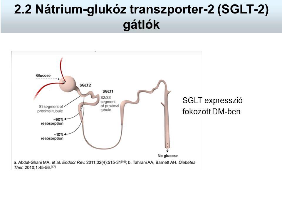 SGLT expresszió fokozott DM-ben 2.2 Nátrium-glukóz transzporter-2 (SGLT-2) gátlók