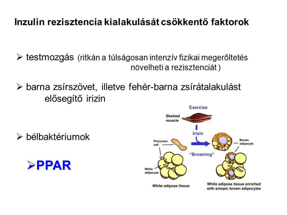  testmozgás (ritkán a túlságosan intenzív fizikai megerőltetés növelheti a rezisztenciát )  barna zsírszövet, illetve fehér-barna zsírátalakulást el