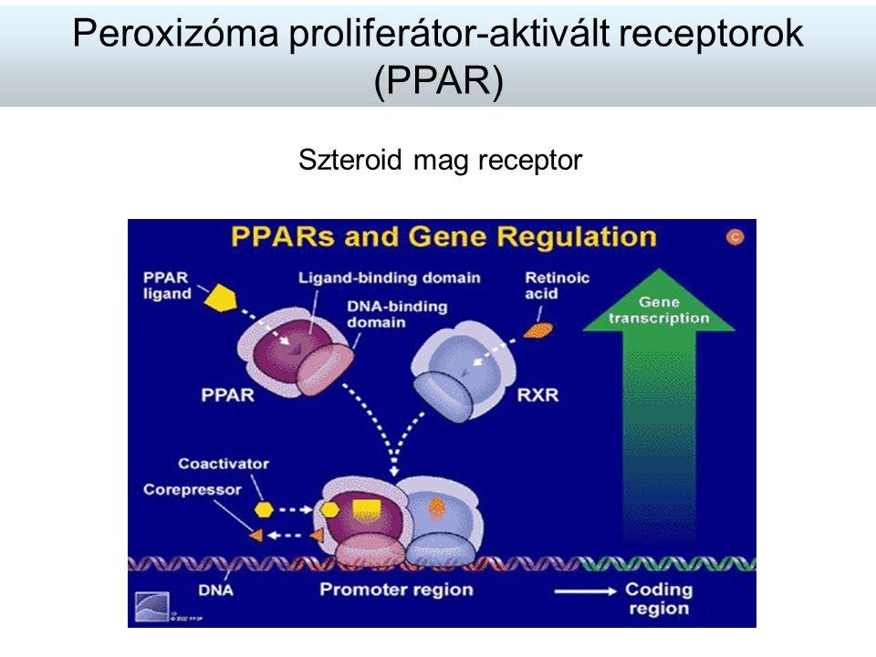 Szteroid mag receptor Peroxizóma proliferátor-aktivált receptorok (PPAR)