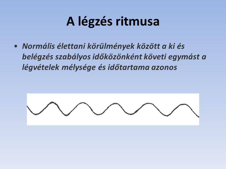 A légzés ritmusa Normális élettani körülmények között a ki és belégzés szabályos időközönként követi egymást a légvételek mélysége és időtartama azonos