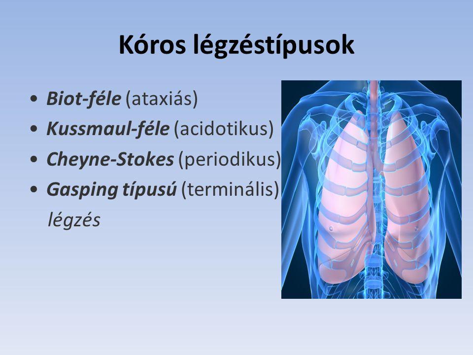 Kóros légzéstípusok Biot-féle (ataxiás) Kussmaul-féle (acidotikus) Cheyne-Stokes (periodikus) Gasping típusú (terminális) légzés
