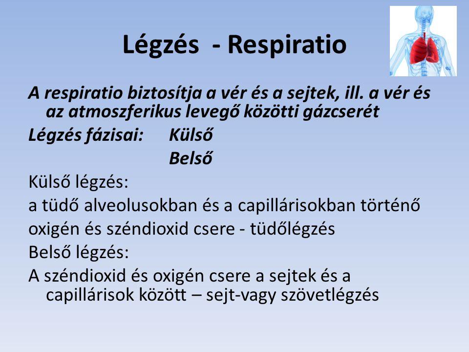 Légzés - Respiratio A respiratio biztosítja a vér és a sejtek, ill.