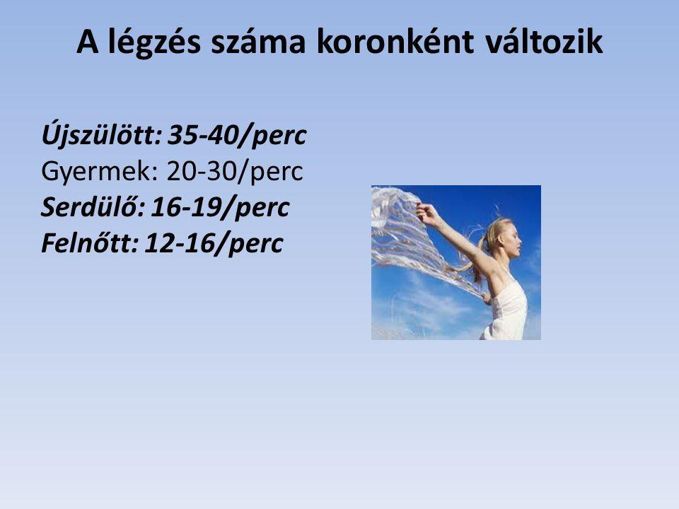A légzés száma koronként változik Újszülött: 35-40/perc Gyermek: 20-30/perc Serdülő: 16-19/perc Felnőtt: 12-16/perc