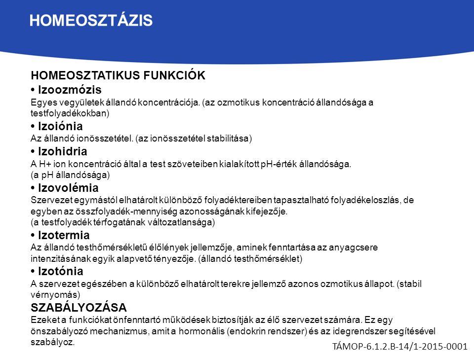 HOMEOSZTÁZIS HOMEOSZTATIKUS FUNKCIÓK Izoozmózis Egyes vegyületek állandó koncentrációja.